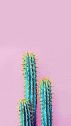Cactus bleu & jaune w/ fond rose pâle Fonds décrans Wallpapers Tumblr, Tumblr Wallpaper, Cute Wallpapers, Iphone Wallpapers, Hd Desktop, Pink Wallpaper Backgrounds, Trendy Wallpaper, Tumbler Backgrounds, Amazing Backgrounds