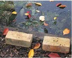 how to take care of koi fish pond Koi pond maintenance is essential in keeping your pond healthy and Koi ponds are a gorgeous focal point for any outdoor space Koi Fish Pond, Koi Ponds, Koi Fish For Sale, Pond Maintenance, Japanese Koi, Keeping Healthy, Leaves, Outdoor Decor, Beautiful