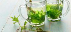 Maria Lopes e a Fitoterapia: Benefícios do chá de hortelã
