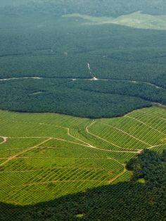 #Substipalm, une alternative crédible à l'huile de palme - Grazia: Grazia Substipalm, une alternative crédible à l'huile de palme Grazia…