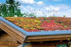 An eco-friendly rooftop has numerous rewards at economical, habitat and group level. Dormer House, Garage Roof, Growing Greens, Living Roofs, Shed Doors, Garden Studio, Rooftop Garden, Roof Design, Green Garden