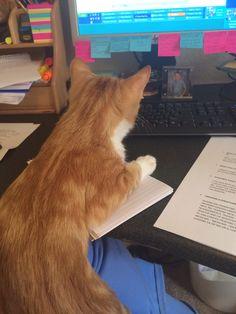 Tweaks is my new office assistant