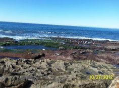 Shell Beach Tide Pools Coast Highway at Ellen Browning Scripps Park La Jolla, CA 92037  Located at the south end of Ellen Browning Scripps Park, Shell Beach Tide Pools are at the bottom of a small stairway there. Come when the tide is very low (1.0 is OK but minus tides are ideal) for best viewing. Usually, December and January are the best months for that. Sea slugs, starfish, fish and other sea life can be visible here. Kids love it and you can picnic at Ellen Browning Scripps Park.