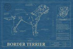 Animal Blueprint Company: Border Terrier Dog Blueprint