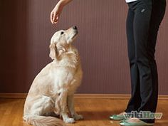 Teach Your Dog to Sit - wikiHow