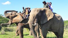 addo-elephant-safari-lodge-elephant-rides