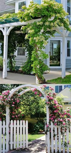 favorite easy-to-grow fragrant flowering vines for year-round beauty. Plant them for an arbor, pergola or fence to create gorgeous outdoor rooms! - A Piece Of Rainbow (Climbing Hydrangea petiolaris shown in top picture) Climbing Hydrangea, Climbing Vines, Full Sun Hydrangea, Climbing Flowers Trellis, Garden Arbor, Garden Trellis, Diy Trellis, Patio Pergola, Backyard Landscaping