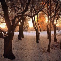 William Hawrelak Park in Edmonton, AB River, Park, City, Plants, Parks, Cities, Plant, Rivers, Planets