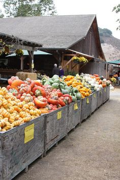 Love visiting local Farm stands - all stocked up with so many varieties of Fall bounty!
