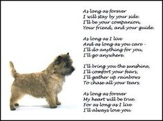"""Cairn Terrier ~ """"Forever"""" poem. THIS was my Buddy. I miss him everyday."""