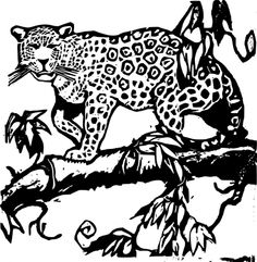 rainforest animals coloring pages and pictures