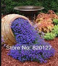 CRYSTAL PALACE Purple BLUE LOBELIA REGATTA Erinus Flower Seeds