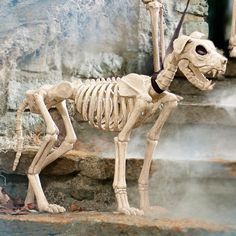Thrill them to the bone with our frightfully realistic 21-1/2 High Skeleton Dog on Leash Halloween figure. Allow our chilling canine to stand guard by the bowl of treats, or take him for a walk at your neighborhood dog park, where you're sure to have it all to yourself. Very easy to care for, he never barks and doesn't eat a thing  apparently. Lifelike skeleton dog Halloween figure with detachable fabric leashCrafted from durable all-weather plastic to scare up compliments for Ha...