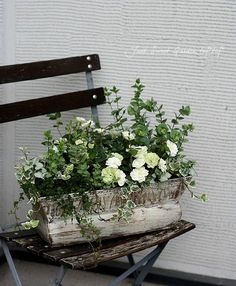 Rose in a rectangle pot with companion plants