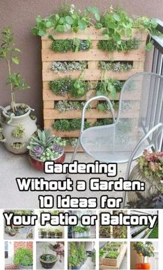 Gardening This article contains ideas for mini-gardens, including patios, balconies, etc. Gardening without a Garden. - Here are some gardening projects that will work on even the smallest patio or balcony as well as tips for growing citrus indoors. Container Gardening, Gardening Tips, Organic Gardening, Urban Gardening, Balcony Gardening, Gardening Courses, Garden Landscaping, Balcony Plants, Patio Plants