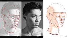 Head Anatomy, Anatomy Poses, Anatomy Study, Anatomy Reference, Beginner Books, Human Head, Political Art, Art Courses, Muscle Groups
