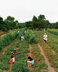 Join a Community Group Agriculture Program