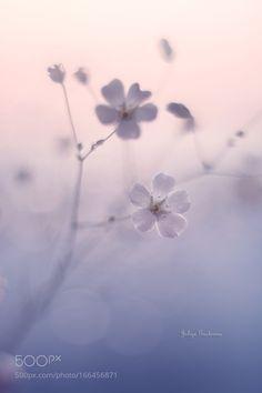 tenderness by kim1971 #nature #photooftheday #amazing #picoftheday