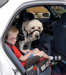 Autism service dogs: True service dogs or merely comfort animals? - National Mental Health | Examiner.com