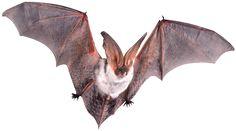 bat.png (494×275)