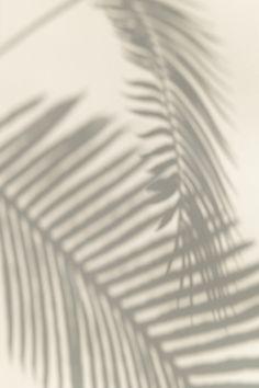 Aesthetic Backgrounds, Aesthetic Iphone Wallpaper, Aesthetic Wallpapers, Shadow Plants, Shadow Photography, Iphone Background Wallpaper, Palm Background, Palm Wallpaper, Beige Background