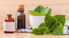 Tato léčivá rostlina perfektně nahradí kapky do nosu a posmrkané kapesníky. Jak z nich vyrobit léčivý sirup a mast na podrážděný nos?
