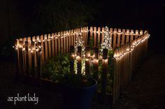 Check out this vegetable garden decorated with tomato cages (upside down) wrapped in lights.  Beautiful!