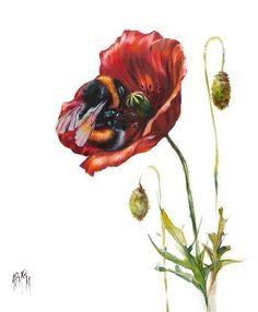 Art Prints Gallery provides top quality framed art prints from leading Scottish and International artists. Botanical Illustration, Illustration Art, Animal Art Prints, Bee Art, Outdoor Art, Animal Design, Cute Drawings, Cute Wallpapers, Framed Art Prints