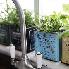 Kitchen window herb garden - love this idea :) Twinings tea tins Herb Garden In Kitchen, Kitchen Herbs, Home And Garden, Herbs Garden, Tea Herbs, Kitchen Sink, Potted Herbs, Garden Oasis, Kitchen Ideas