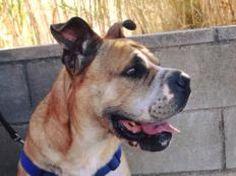 Adopta a Tochi ( Mestizo ) - #adopta #perros