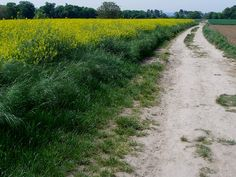 "Vincent van Gogh would have walked this dirt path many times with his easel, canvases, and paints. He is known to have painted several canvases in these fields in Auvers-sur-Oise, France, having spent the final two-and-a-half months of his life here between May and July, 1890.  He painted ""Wheat Field with Crows"" just ahead in the field to the left. Thatched Cottages of Cordeville and ""Landscape at Auvers in the Rain"" are among other works painted in the immediate vicinity."