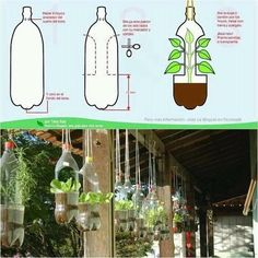 soda bottles + plants = hanging garden!