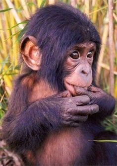 Oh my goodness... Primates are equal parts incredible and freaky for me... they're just so human like! ❤️