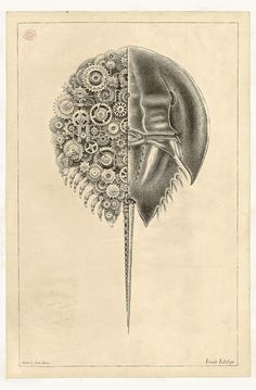 Mechanical Crustaceans with Clockwork Insides Illustrated by Steeven Salvat