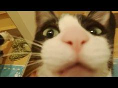 玄関開けるまで259,202秒でにゃんこ♪ Cat happy to see owner after 3 days -Cat welcome - short.5 after 3 days- - YouTube