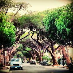 Anapamu Street - Santa Barbara