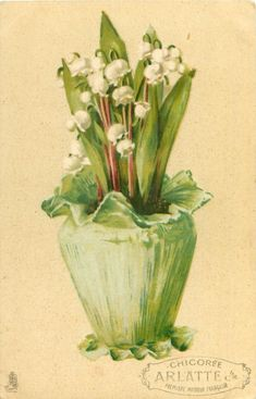 lilies-of-the-valley in pot trimmed with green paper