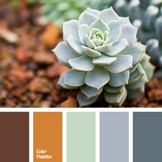 Color Palette #2796