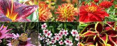 Flores para o Verão - 8 flores para plantar no jardim para o Verão             A beleza e a espetacularidade de um jardim nos meses mais quentes de verão destacam-se pela mistura e harmonia dos seus elementos constituintes. Escolha 8flores para plantar no jardimpara o verão e mantenha o seu espaço exter... - http://www.precofacil.com.br/ecoblog/2017/01/06/flores-para-o-verao/