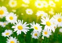 Cute White Flowers