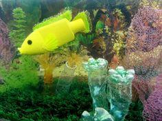 PET bottles-DIY style fish Aquarium Algien
