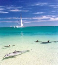 Dolphins coming to shore at Monkey Mia, Western Australia. I would love to visit this place because they are famous for having many dolphins around the shore. also I have always wanted to be swim and chill with dolphins. Places Around The World, Oh The Places You'll Go, Places To Travel, Places To Visit, Western Australia, Australia Travel, Visit Australia, Queensland Australia, Melbourne Australia