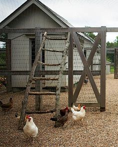 Martha's chicken coop area is to perfect for those little chickies