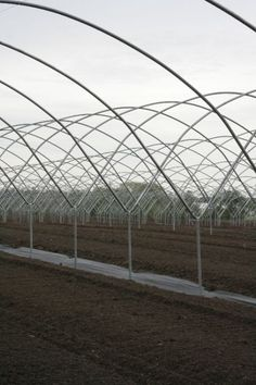 Our Growing Practices using High Tunnel Farming   Untiedt's Vegetable Farm, Inc.