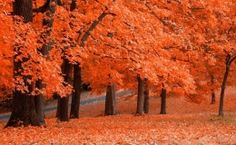 Tangerine Dream, Autumn, Beauty,