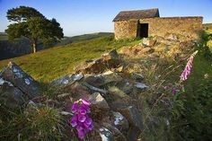 Windy Hill near Countisbury, the first weekend in July 2013 - summer at last! Photo by Rob Hatton #Exmoor #travel #summer