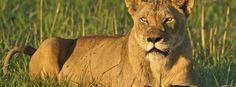 #Zambia: guide e consigli utili per il viaggio - Lonely Planet Italia