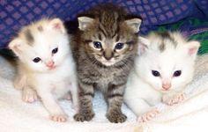 Como fazer os gatos viverem mais