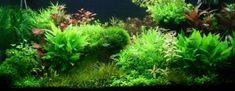 Planted Aquarium Design Contest 2013. Results of members of the jury voting   Все для аквариума, террариума и пруда