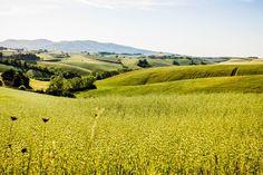 I love trekking: la natura inaspettata dei dintorni di Firenze. | BoBos
